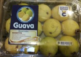 Guavas in North Dakota?